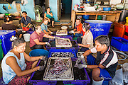 30 APRIL 2013 - MAHACHAI, SAMUT SAKHON, THAILAND:   Burmese workers sort squid in front of their apartment building in the Thai fishing port of Mahachai. The Thai fishing industry is heavily reliant on Burmese and Cambodian migrants. Burmese migrants crew many of the fishing boats that sail out of Samut Sakhon and staff many of the fish processing plants in Samut Sakhon, about 45 miles south of Bangkok. Migrants pay as much $700 (US) each to be smuggled from the Burmese border to Samut Sakhon for jobs that pay less than $5.00 (US) per day. There have also been reports that some Burmese workers are abused and held in slavery like conditions in the Thai fishing industry.         PHOTO BY JACK KURTZ