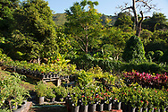 A wide variety of tropical plants on sale at the St. Rose Nursery, La Mode, St. George's, Grenada