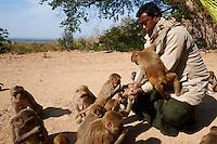 Myanmar (Birmanie), division de Sagaing, Monywa, grottes bouddhistes de Po Win Daung, le gardien avec des singes // Myanmar (Burma), Sagaing division, Monywa, Po Win Daung buddhist cave, guard with monkey