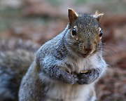 Image of asquirrel