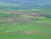 Early Spring Quilt, Palouse Hills