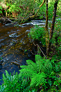 Oceania, Australia; Australian,  Tasmania; Gordon Wild Rivers National Park; UNESCO; World Heritage; Old Growth Forest;