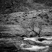 Tree in river pass of llanberis, (none), Wales (November 2005)