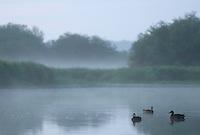 Mission: Black Storks River Elbe Germany; Biosphärenreservat Niedersächsische Elbtalaue; Biosphere Reserve Middle Elbe. digitally cleaned.