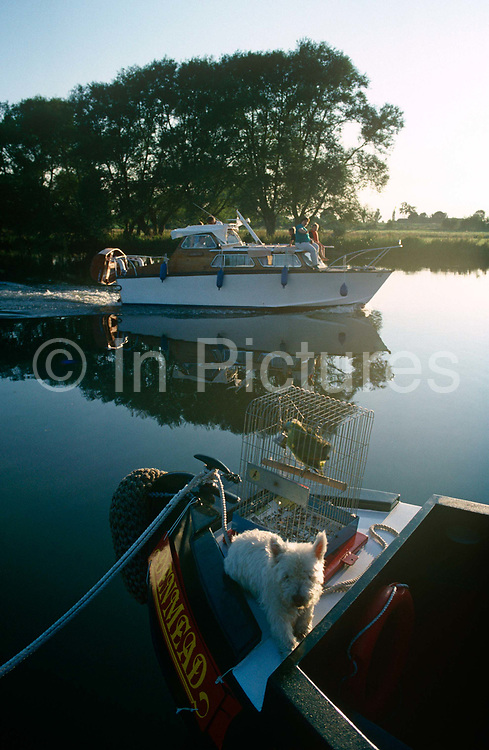 "A motor launch passes a narrow boat with parrot and dog in the early morning on a still River Thames at Dorchester, Oxfordshire. In the foreground is a caged parrot and a small Scotty dog. We see a scene of early misty light across the perfectly still waters, a landscape of peace and tranquillity. The mirror-like surface is at Dorchester-on-Thames, just above the Thame's confluence with the River Thames. The River Thames is the second longest river in the United Kingdom and the longest river entirely in England (215 miles or 346 km long). It rises at Thames Head in Gloucestershire, and flows into the North Sea at the Thames Estuary. Historically the Thames was only so-named downstream of the village; upstream it is named the Isis, and Ordnance Survey maps continue to label the river as ""River Thames or Isis"" until Dorchester."