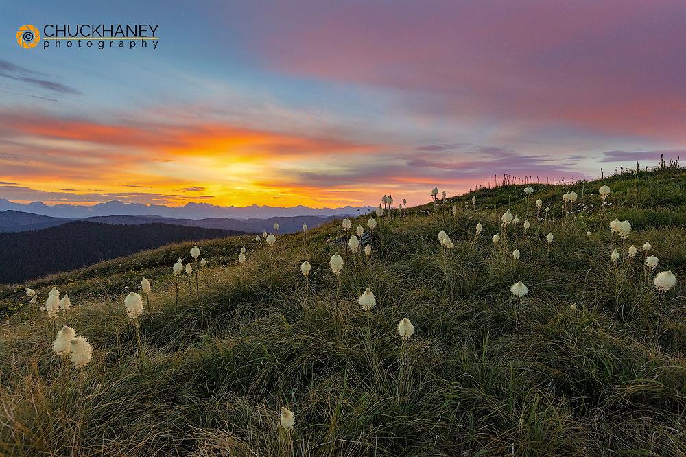 Beargrass bloom on Werner Peak, Stillwater State Forest, Montana, USA