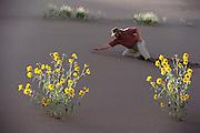 "Mark Tilden's robot: the analog nervous net- ""Unibug 1.0"" walking great Sand Dunes National Monument  in Colorado. MODEL RELEASED"
