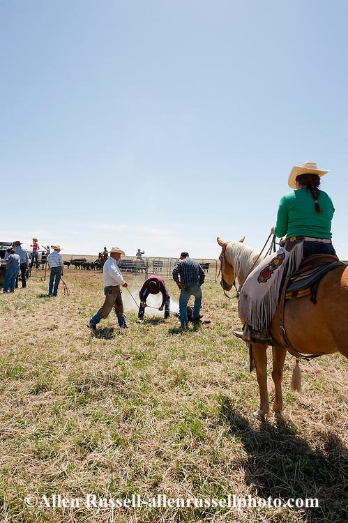 Cowgirls, drags calves to the fire, branding, Lazy SR Ranch, Wilsall, Montana, Jessie Sarrazin.