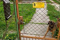 Suraz, woj. podlaskie, 03.05.2020. N/z skrzynka pocztowa na posesji, ktorej pilnuje pies. To swietne zabezpieczenie w przypadku korespondencyjnych wyborow prezydenckich fot Michal Kosc / AGENCJA WSCHOD