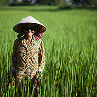An elderly woman attends her rice paddies in a rural area of Takéo province, Cambodia