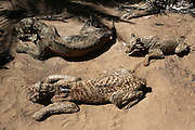 March 5, 2016 - Gaza, gaza strip, Palestine - <br /> <br /> dead Mummified animals at the zoo in Khan Younis<br /> <br /> A Palestinian worker is seen inspecting the body of a dead Mummified animals at the zoo in Khan Younis, in the Gaze strip on March 5, 2016.. Many animals in a Gaza zoo have died from neglect and starvation since the start of the Israeli-Palestinian conflict in the 2014 war <br /> ©Exclusivepix Media