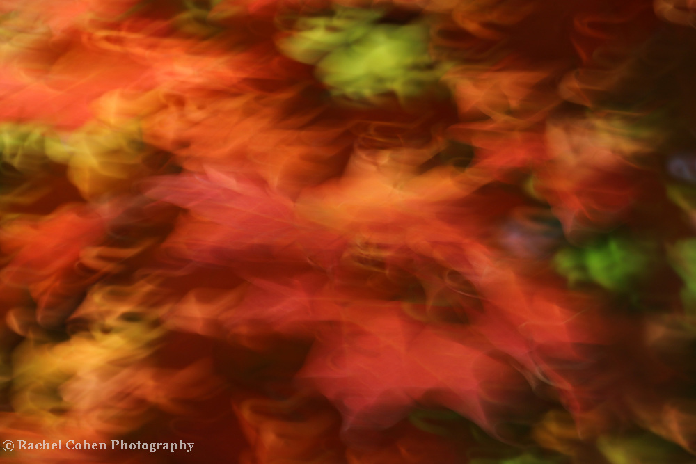 """""""Holiday Dancing"""" <br /> <br /> Beautiful Holiday colors adorn this lovely autumn abstract!"""