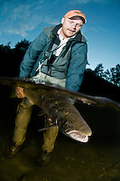 Atlantic Salmon, Salmo salar<br /> Flyfishing<br /> Model name: Krister Hoel-Model release form valid by photographer. Photographed at catch/release fishing. River Orkla, Rennebu, Norway.