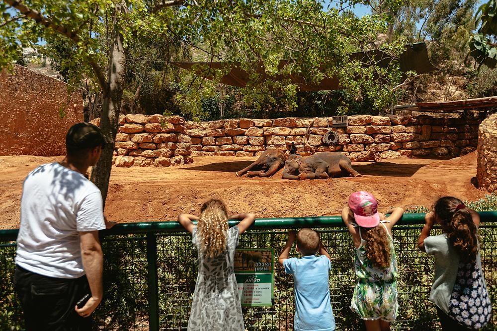 Visitors watch elephants in the Jerusalem Biblical Zoo