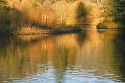 Tree Shadows, Indian Creek, Heart K Ranch, Genesee Valley, California Rivers, Fall Reflections, Alders, Genesee Valley, California Mountains, Late Fall, Autumn, Fall Color, Fall Leaves, Ponderosa Pine