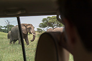Over the shoulder view of a tourist watching African elephants (Loxodonta africana) from a safari car in Tarangire National Park, Tanzania