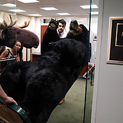 Max the Moose and Kodak the Bear make their arrival to Sen. Jeanne Shaheen's (D-N.H.) office on Tuesday, June 4, 2019 prior to the 10th annual Experience New Hampshire reception later this week.