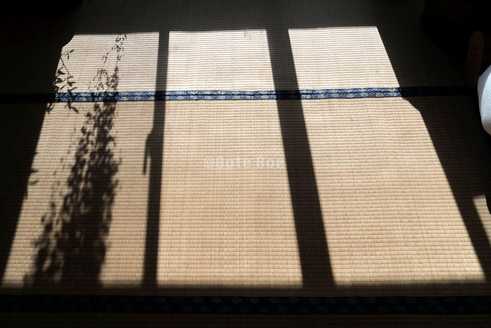 tatami mat floor with window and plant shadow Japan