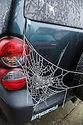 USA, Oregon, Keizer, hoar frost orb web.