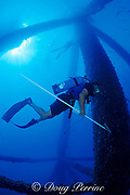 """Dr. Chris Koenig carrying a device to remove old tags <br /> from previously tagged Goliath grouper or <br /> jewfish, Epinephelus itajara, """" Top Gun Towers """"<br /> Florida ( Gulf of Mexico ) FSU-NMFS jewfish research"""