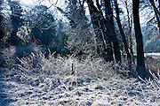 Woodland scene during hoar frost, The Cotswolds, Oxfordshire, United Kingdom