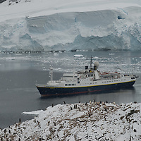The expedition ship National Geographic Endeavor anchors at Neko Harbor, Antarctica, between a Gentoo Penguin rookery and a calving glacier front.