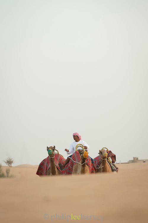 Man with camels in the desert near Dubai, for tourism, United Arab Emirates