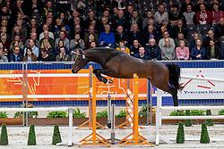 095, Mooiman EB<br /> KWPN hengstenkeuring - 's Hertogenbosch 2020<br /> © Hippo Foto - Dirk Caremans<br />  29/01/2020