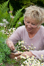 Harvesting pulsatilla seed and sowing into a pot in situ
