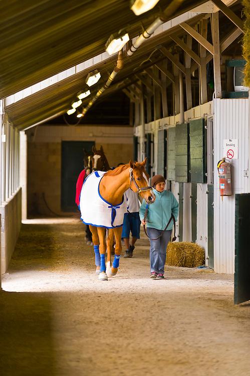 Exercising thoroughbred horses, Keeneland Race Course, Lexington, Kentucky USA