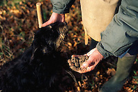 ca. 1990s, Vaucluse Department, France --- Truffle Hunter Praising Dog --- Image by © Owen Franken/CORBIS
