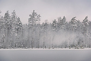 Strong wind gust blows powdery snow off the trees. In early morning over frozen nameless lake and surrounding forests on snowy winter day in Vidzeme, near Nītaure, Vidzeme, Latvia Ⓒ Davis Ulands | davisulands.com