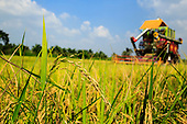 Thai Rice Industry