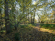Ramridge Copse, Ragged Appleshaw, Andover Hampshire - Autumn