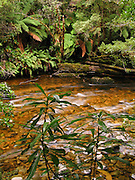 The Surprise River flows through verdant rainforest of Franklin-Gordon Wild Rivers National Park, Tasmania, Australia. The Tasmanian Wilderness was honored as a UNESCO World Heritage Site in 1982, expanded in 1989.