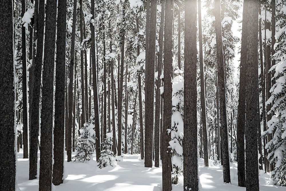 Tracie Spence's 'Snow White' fine art photography