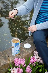 Feeding fish in a raised pond