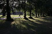 A morning walker taking daily exercise strides between ash trees in London's Ruskin Park.