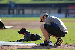 May 6, 2017 - St. Paul, Minn, USA - United States - Head groundskeeper Nick Baker secured down an infield tarp as Olaf the German Wirehaired Pointer kept him company. ]  Shari L. Gross • sgross@startribune.com    The St. Paul Saints held their first open workout of the season on CHS Field in St. Paul, Minn. on Saturday, May 6, 2017. (Credit Image: © Shari L. Gross/Minneapolis Star Tribune via ZUMA Wire)
