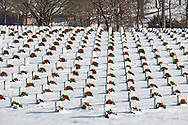 65095-03012 Wreaths on graves in winter Jefferson Barracks National Cemetery St. Louis,  MO