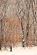 Bryce (age 9) walks through a New England winter woods wonderland of freshly fallen snow