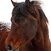 20101204 Gentle Spirit Morgan Horse Rescue
