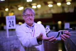 © Licensed to London News Pictures. 21/01/2017. Blackpool, UK. John Bell of Ayershire with his Supreme Champion pigeon at the British Homing World, Show of the Year at The Winter Gardens in Blackpool. The show has been running since 1973 with over 2500 pigeons on show and an expected 25000 visitors over the weekend. This is the largest gathering of Pigeon Fanciers in the United Kingdom. From trade stands, various groups and organisations, talks, films, young fanciers areas, to the main event: the showing and judging of thousands of the top pigeons in the UK. Photo credit: Nigel Roddis/LNP