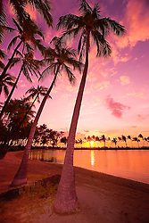 Coconut Palms, Cocos nucifera,`Anaeho`omalu Beach, Waikoloa, Big Island, Hawaii, Pacific Ocean