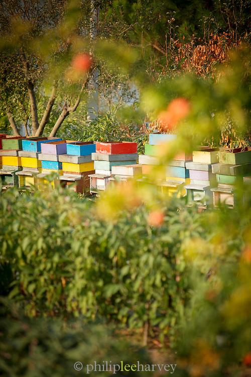 Bee Hives on Sant'Erasmo Island, Venice, Italy, Europe