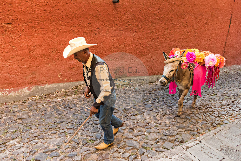 A old cowboy leads his decorated donkey through a cobble street San in Miguel de Allende, Guanajuato, Mexico. Decorated burros are used in traditional Mexican wedding celebrations in the city.