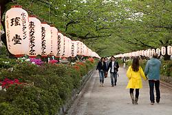 Asia, Japan, Honshu island, Kanagawa Prefecture, Kamakura, paper lanterns along road leading to Tsurugaoka Hachimangu shrine