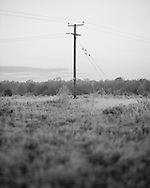 A power cable crosses Whitmoor Common, supported by a wooden pole. Photograph by Andrew Tobin/Tobinators Ltd