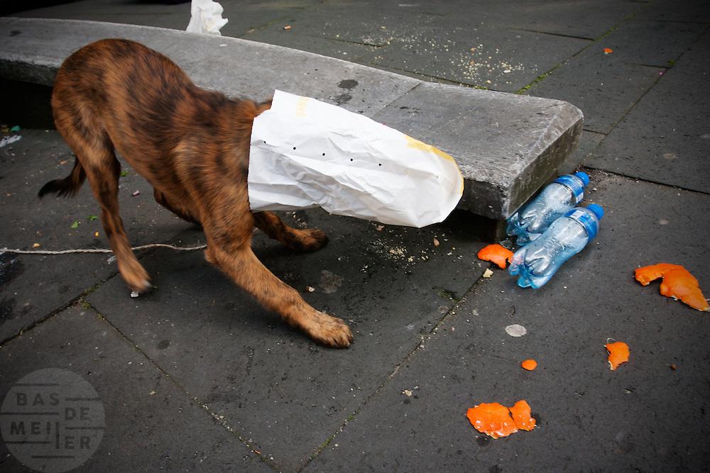 Een hond kruipt in een zak om een broodje eruit te vissen om op te eten.<br /> <br /> A dog is putting its mouth in a bag to get some food