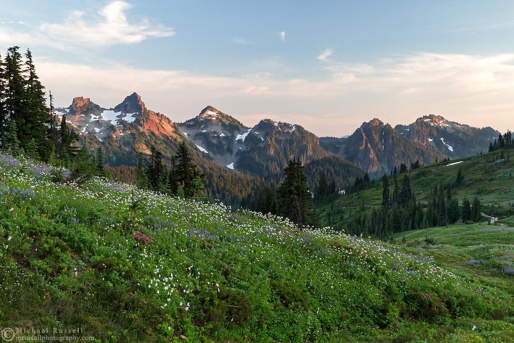 Wildflowers near Paradise at Mount Rainier National Park, Washington State, USA. Peaks of the Tatoosh Range is in the background.